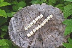 在森林里措辞木小珠自然组分树桩表面上的 免版税库存照片