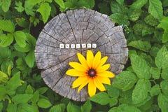 在森林里措辞自然树桩表面上的木小珠 免版税库存图片
