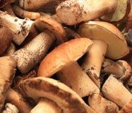 森林蘑菇 免版税库存图片