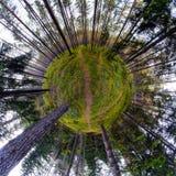 在森林里放松时间 免版税图库摄影