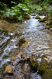在森林里清洗河 库存图片
