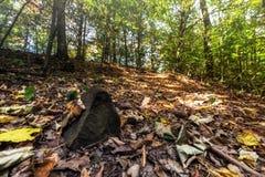 在森林里烘干叶子和石头 免版税库存照片