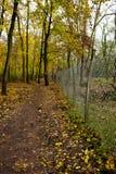 在森林里走在铁丝网篱芭 免版税图库摄影