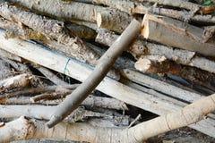 在森林里采伐背景 免版税库存照片
