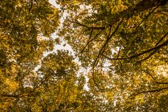 在森林里降低在橙树叶子的看法在秋天初期  图库摄影