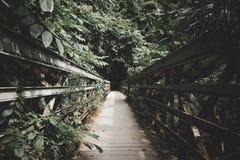 在森林里面的一个狭窄的木桥 库存图片
