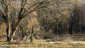 在森林里,在12月的风暴以后 库存图片