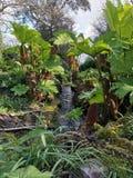 在森林里,康沃尔郡 图库摄影