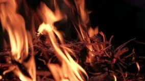 在森林里,被点燃篝火 股票录像