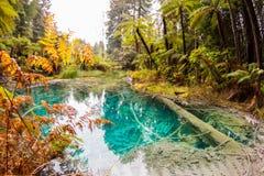 在森林里围拢的池水 免版税库存图片