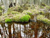 在森林里 免版税库存图片