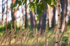 在森林里 免版税库存照片