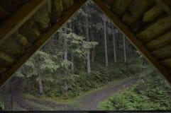 在森林里 免版税图库摄影