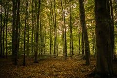 在森林里 库存图片