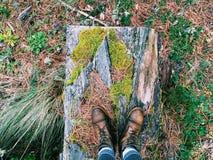 在森林里 库存照片