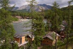 在森林野生生物的供膳寄宿处在河 库存照片