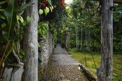 在森林阵营的Hangging桥梁 免版税库存照片