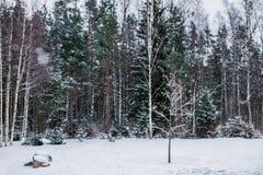 在森林附近的大雪在冬时 库存照片
