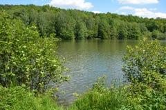 在森林附近的小湖在春天 库存图片