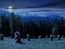 在森林附近的干草堆一个草甸的在Tatras在晚上 库存图片