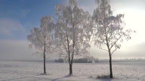 在森林附近的照相机运动在冬天,太阳是光亮的,弗罗斯特闪耀在树 股票录像