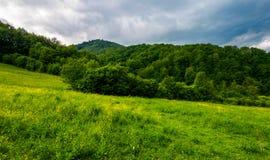 在森林附近的象草的牧场地多暴风雨的天气的 免版税库存图片