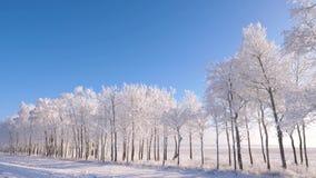在森林附近的运动在发光冬天、的太阳,弗罗斯特和雪在树闪耀 股票录像