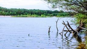 在森林附近的Summer湖有树的 免版税库存照片