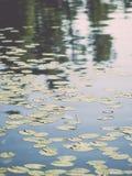 在森林附近的Summer湖-葡萄酒作用 库存图片