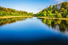 在森林附近的Summer湖 免版税库存照片