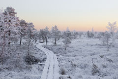 在森林风景的冷淡的早晨用冻植物、树和水 免版税库存照片
