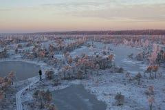 在森林风景的冷淡的早晨用冻植物、树和水 库存照片