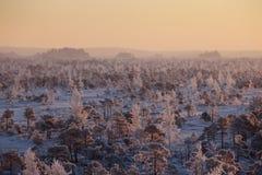 在森林风景的冷淡的早晨用冻植物、树和水 图库摄影