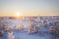 在森林风景的冷淡的早晨用冻植物、树和水 免版税库存图片