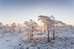 在森林风景的冷淡的早晨用冻植物、树和水 免版税图库摄影