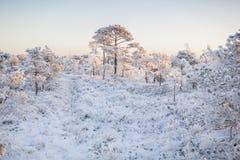 在森林风景的冷淡的早晨用冻植物、树和水 库存图片