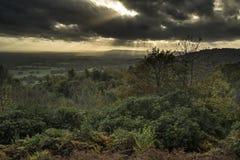 在森林风景的美好的秋天秋天日落与喜怒无常的博士 免版税库存照片