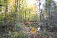 在森林,东北圩田,荷兰 免版税图库摄影