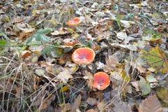 在森林,东北圩田,荷兰 免版税库存图片