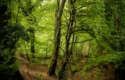 在森林,在与下落的叶子的秋天 库存图片