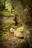 在森林,在与下落的叶子的秋天 库存照片