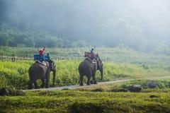 在森林,泰国里编组游人乘坐在一头大象 库存照片