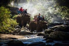 在森林,老挝里编组游人乘坐在一头大象 免版税图库摄影