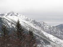 在森林, Croix de Bauzon, Ardèche,法国里下雪 库存照片