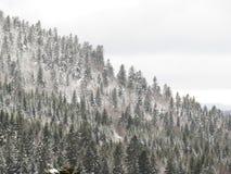 在森林, Croix de Bauzon, Ardèche,法国里下雪 免版税库存图片