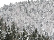 在森林, Croix de Bauzon, Ardèche,法国里下雪 免版税库存照片