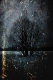 在森林幻想艺术处理的冬天col的照片 免版税库存图片