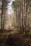 在森林黄昏的道路方式在早期的春天 免版税库存图片