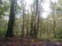 在森林 免版税图库摄影