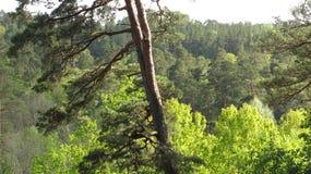 在森林 图库摄影